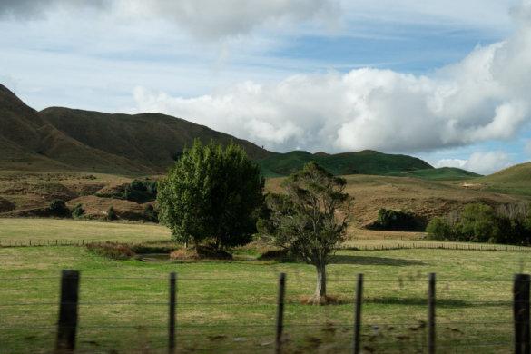 Neuseeland Urlaub Stefan Franke 2019 31