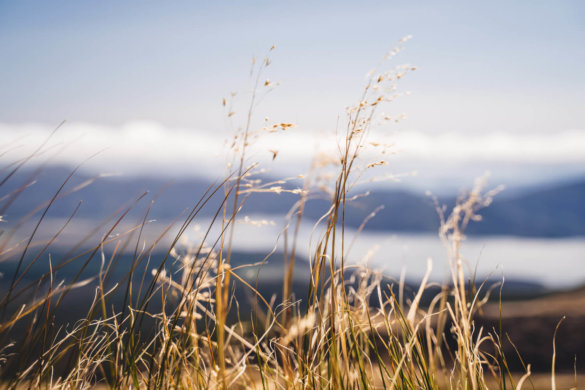 Neuseeland Urlaub Stefan Franke 2019 56