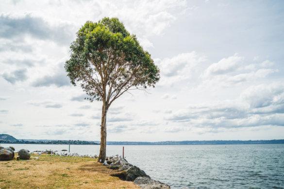 Neuseeland Urlaub Stefan Franke 2019 83