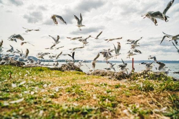 Neuseeland Urlaub Stefan Franke 2019 84