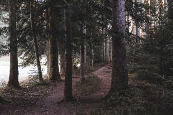 Allgäu Scheidegg 2019 29